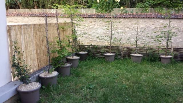 Photo après : jardin de ville protégé du passage