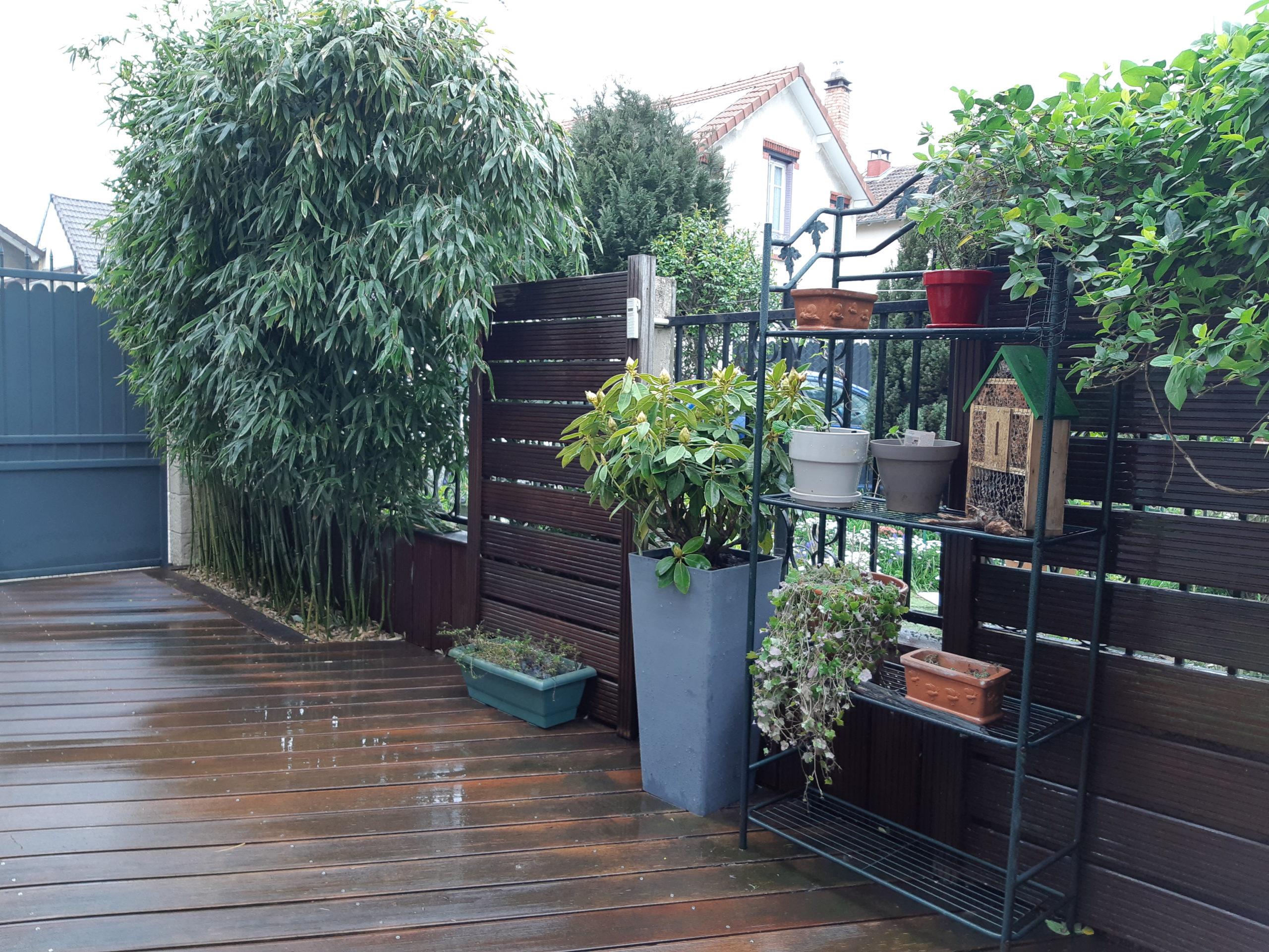 Photo après : bambou taillé et terrasse embellie