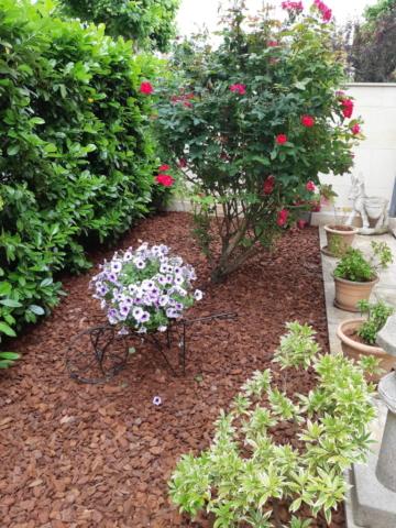 Jardin fleuri paillis entretien Champigny sur Marne