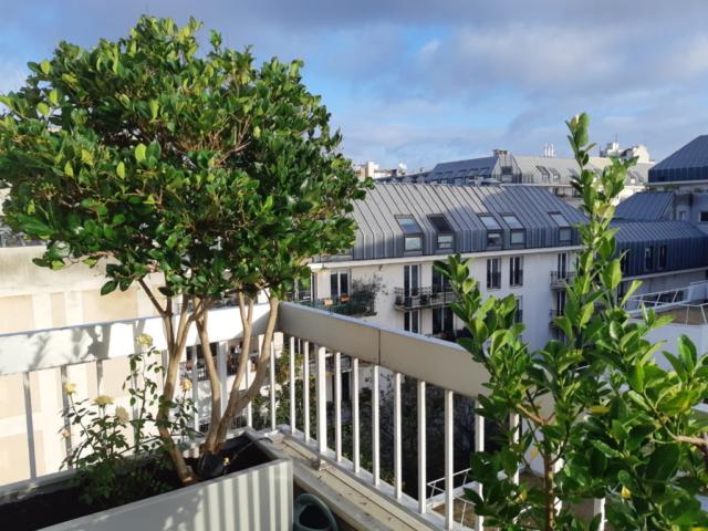 terrasse entretien Paris