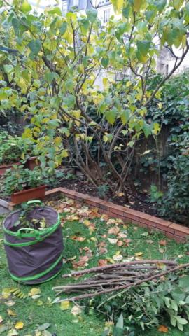 entretien jardin saison taille