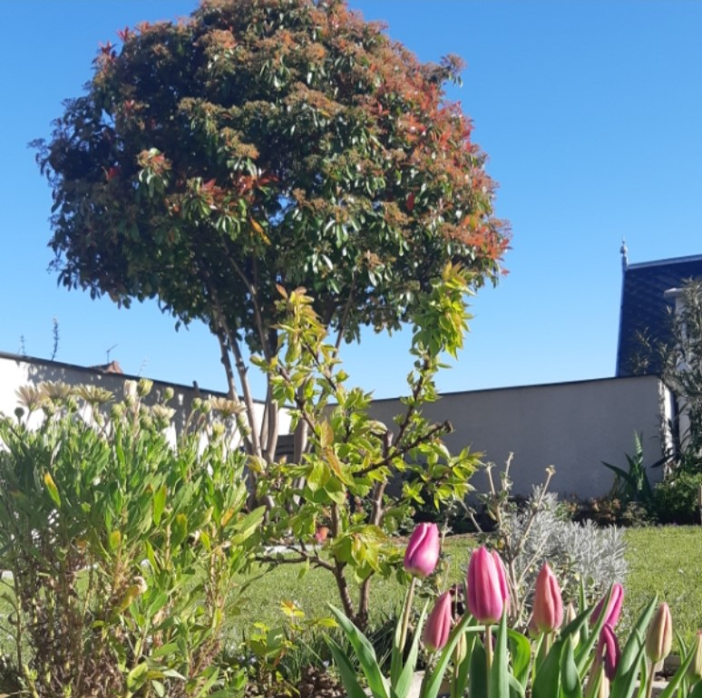 jardin ville jaridn terrasse entretien