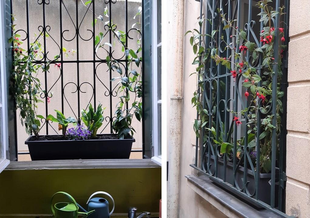 fleurir fenêtre rebord